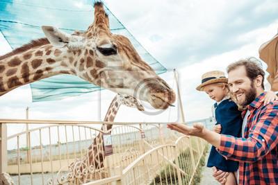 Fototapete Familie Blick auf Giraffe im Zoo