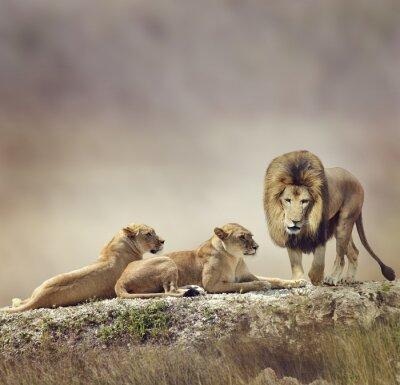 Familie der Löwen