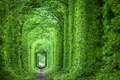 Fototapete Fantastischer realer Tunnel der Liebe, grüne Bäume und die Eisenbahn