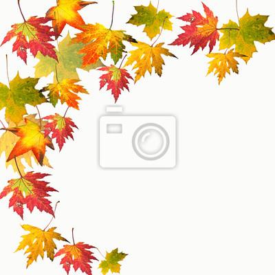 Farben des herbstes: bunte ahorn-blätter fototapete • fototapeten ...