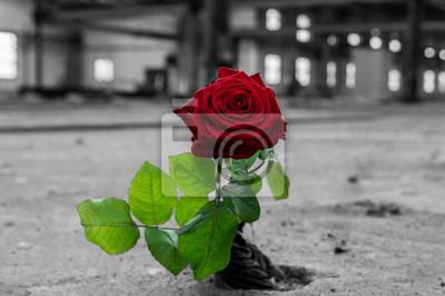 Fototapete Farbkontrast Schwarz Weiß Rot Grün