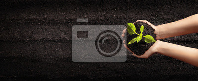 Fototapete Female Hands Planting Young Plants. Garden Concept