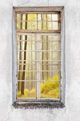 Fototapete Fenster der alten Zement Haus mit Blick auf den Wald