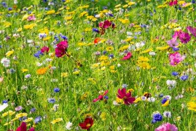 Fototapete field of colorful, wild flowers