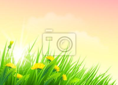 Field of Frühlingsblumen. Vektor-Illustration