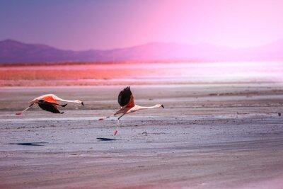 Fototapete Flamingo