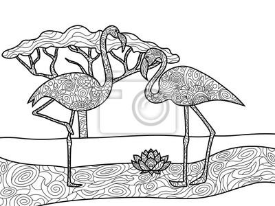 Flamingo ausmalbilder für erwachsene vektor fototapete • fototapeten ...