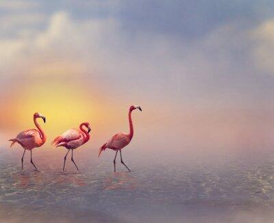 Fototapete Flamingo Birds