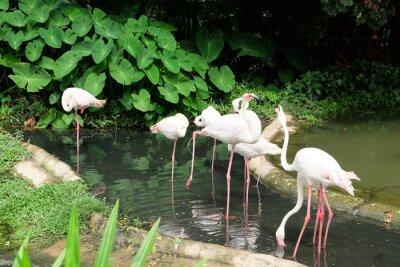 Flamingo-Schönheit und Vögel ernähren sich von Fischen.