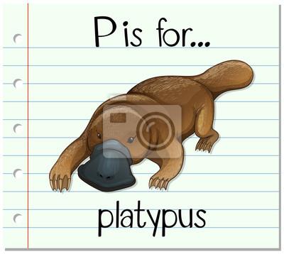 Flashcard buchstabe p ist für platypus fototapete • fototapeten ...