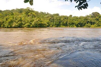 Fototapete Fleuve d'amazonie
