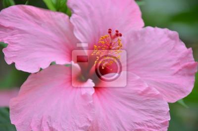 Flor Fototapete Fototapeten Stieg Anlage Blume Myloviewde