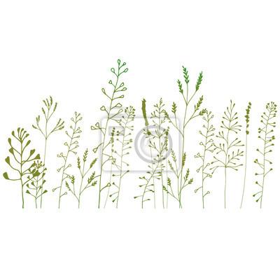Gräser Pflanzen floral background mit wiese gräser pflanzen und blumen outline