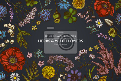 Fototapete Floral design on dark background with shepherd's purse, heather, fern, wild garlic, clover, globethistle, gentiana, astilbe, craspedia, lagurus, black caraway, chamomile, dandelion, poppy flower, lily