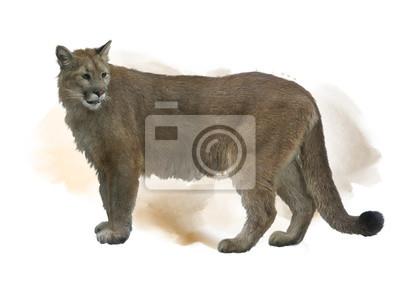 Florida Panther oder Cougar Aquarell