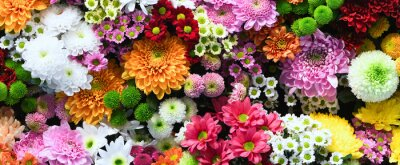 Fototapete Flowers wall background with amazing red,orange,pink,purple,green and white chrysanthemum flowers ,Wedding decoration, hand made Beautiful flower wall background
