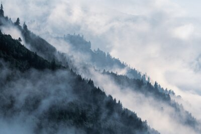 Fototapete Forested mountain slope in low lying valley fog with silhouettes of evergreen conifers shrouded in mist.