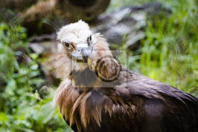 Fototapete Foto von einem Greif im Zoo
