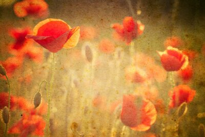 Fototapete Foto von einem Mohnblumen Blumen