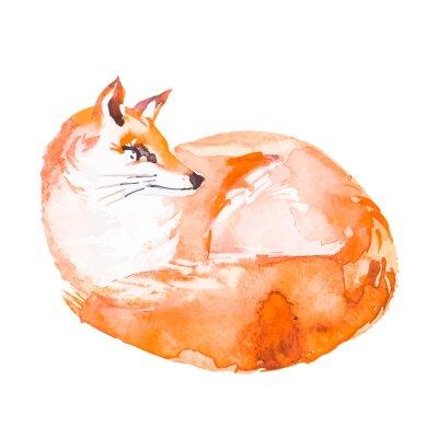 Fototapete Fox isoliert auf weißem Hintergrund. Aquarell. .