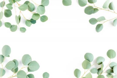 Fototapete frame of green branches, eucalyptus leaves on a white background. flat layout, top view