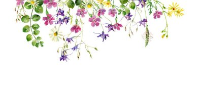 Fototapete Frame of wild flowers and herbs on a white background. For greetings and invitations