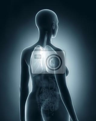 Frau atmungsorgane anatomie x-ray schwarz rückansicht fototapete ...