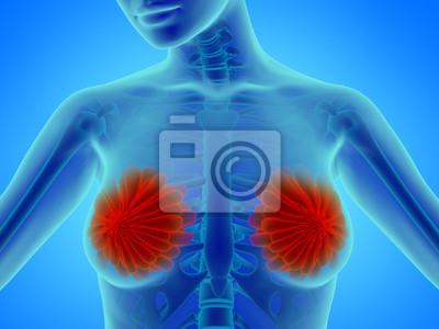 Frau brust mit brustdrüse - anatomie illustration fototapete ...