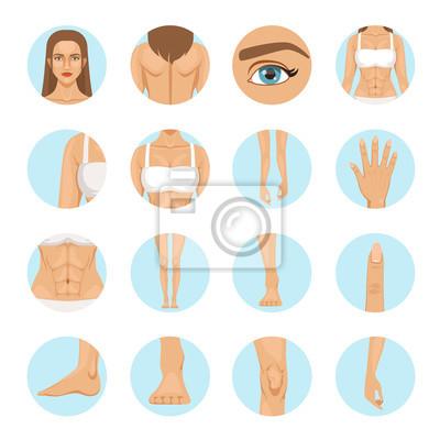 Frau körperteile. menschliche anatomie vektor-illustration isoliert ...
