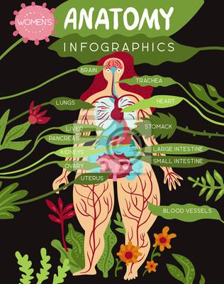 Frauen-anatomie infographics fototapete • fototapeten medicals, Darm ...