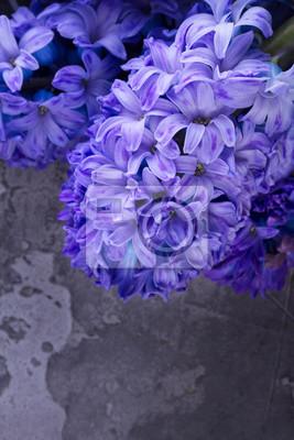 Fototapete Frische Blumen der Hyazinthe