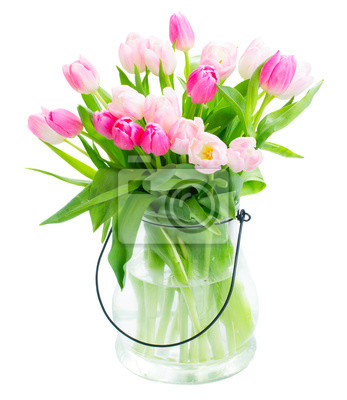 Fototapete Frische Blumen der Tulpe