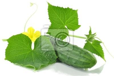 frische Gurken mit Blättern