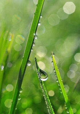 Fototapete Frisches grünes Gras mit Tautropfen Nahaufnahme. Natur Hintergrund