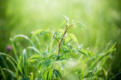 Fototapete Frisches grünes Gras mit Wassertropfen auf dem Hintergrund der Sonnenlichtstrahlen. Weicher Fokus