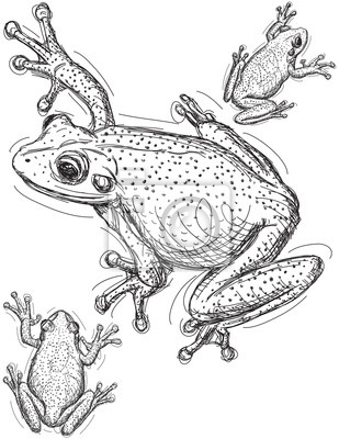 Frog Skizzen