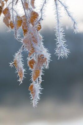 Fototapete Frost bedeckt Zweige