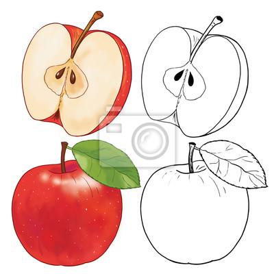 Früchte Malvorlage Apfel Illustration Für Kinder Fototapete