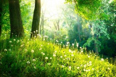 Fototapete Frühling Natur. Schöne Landschaft. Grünes Gras und Bäume