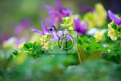 Fruhling Wilde Blumen Im Fruhjahr In Den Waldern Von Sibirien