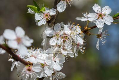 Fruhling Winter Erste Blumen Wetter Insekten Deko Fototapete