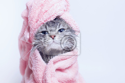 Fototapete Funny smiling wet gray tabby cute kitten after bath wrapped in pink towel with blue eyes. Pets and lifestyle concept. Just washed lovely fluffy cat with towel around his head on grey background.