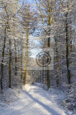 Fußweg im verschneiten Wald
