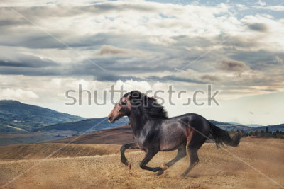 Fototapete Galloping horse