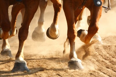 Fototapete Galoppierende Pferdehufe