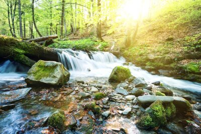 Fototapete Gebirgsbach Wasserfall in den grünen Wald