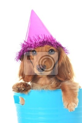 Geburtstag Dackel Fototapete Fototapeten Hunde Partei Hut Alles
