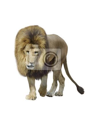 Gehen Lion