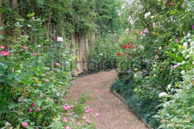 Fototapete Gehweg im botanischen Rosengarten, Foto auf Lager