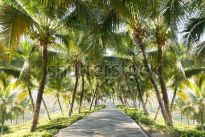 Fototapete Gehweg mit Kokosnussbaum im Garten